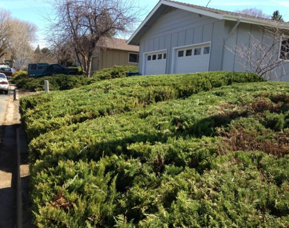 Bush Trimming After – ELN Klamath Falls Sprinklers and Yard Maintenance