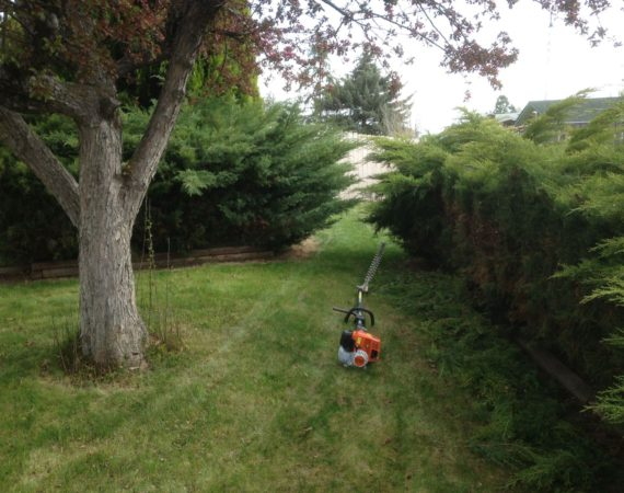 Bush Trimming Before (2) – ELN Klamath Falls Sprinklers and Yard Maintenance